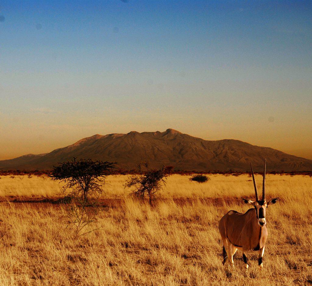 Äthiopien Reisen - Antilope im Awash Nationalpark