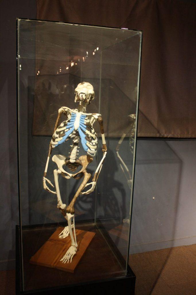Äthiopienreisen - Lucy im Nationalmuseum Addis Abeba