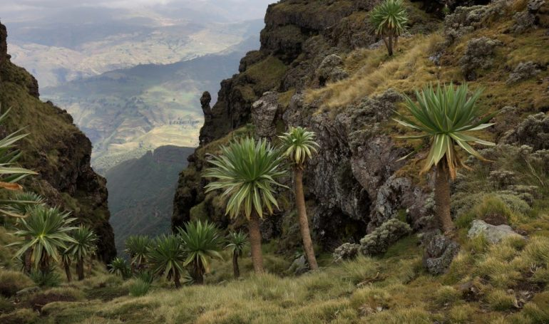 Reise nach Äthiopien - Semiengebirge