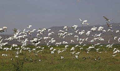 Äthiopien Rundreisen - Vögel