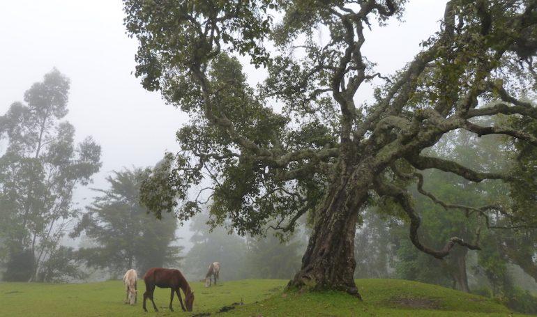 Äthiopiens faszinierende tierwelt