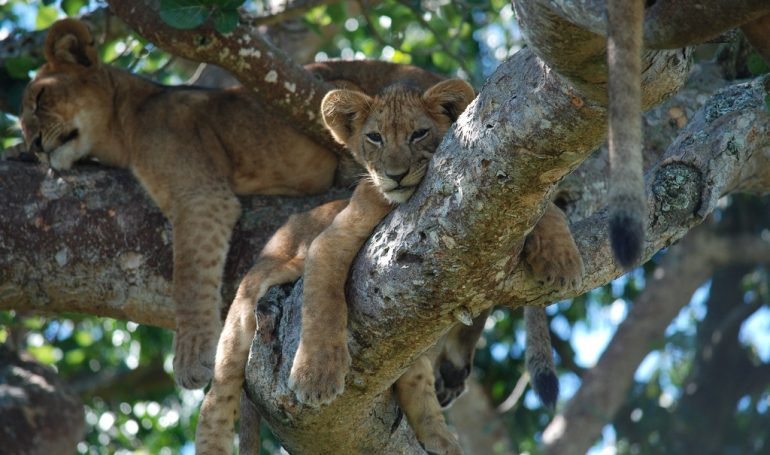 Äthiopien und Safari in Tansania -Lake Manyara