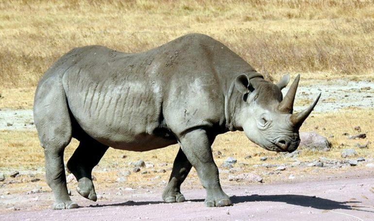Äthiopien und Safari in Tansania -Serengeti